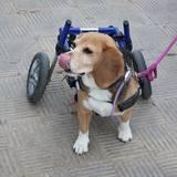 Duna (Beagle)