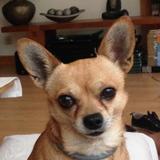 Luco (Chihuahua)
