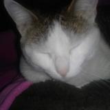 Cloe Es Un Gato