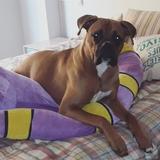 Jacko (Boxer)