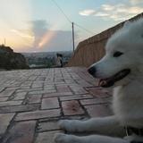 Ela (Samoyedo)