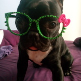 Kora (Bulldog Francés)