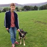 Bailey - German Shepherd Dog