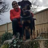 Bruno (Rottweiler)