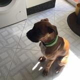 Blackie (Boxer)