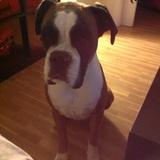 Kora (Boxer)