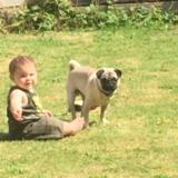 Marley - Pug