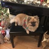 Nala (Pomeranian)