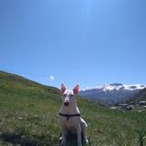 Fito (Bull Terrier)