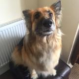 Elsa (German Shepherd Dog)