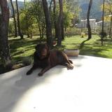 Eija (Labrador Retriever)
