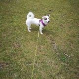 Mia (Jack Russell Terrier)