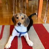 Riot - Beagle