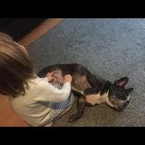 XUNE - Bulldog Francés