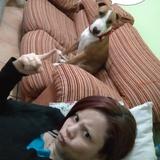 Vincent (Bull Terrier)