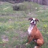 Barón (Boxer)