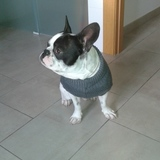 Kiko (Bulldog Francés)