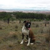 Logan (Boxer)
