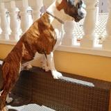 Rico (Boxer)