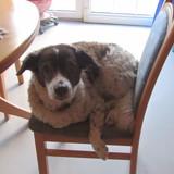 Loki (Friesische Wasserhund )