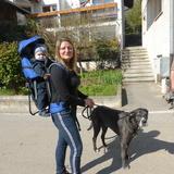Paula (Deutsche Dogge)