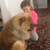 Nelson (Chow Chow)