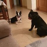 Oreo (Billy)