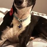 Joe (Greyhound)