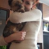 Tofi (Yorkshire Terrier)
