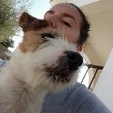 Piruja (Jack Russell Terrier)