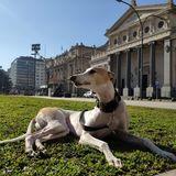 Lupe (Greyhound)