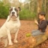 Bella (American Staffordshire Terrier)