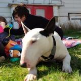Dana (Bull Terrier)