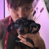 Roky (Manchester Terrier)
