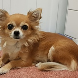 Loya (Chihuahua)