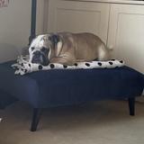 Reggie (English Bulldog)