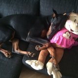 Bella (Dobermann)