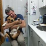 chop - Beagle