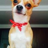 Pelayo (Chihuahua)