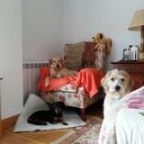 Pluto, Rufo Y Lulu (Teckel)