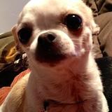 Canoli - Chihuahua