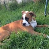 Bimba (Boxer)