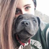 Bamba (Staffordshire Bull Terrier)