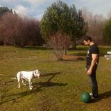 Beca (Dogo Argentino)