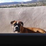 Mia (Boxer)
