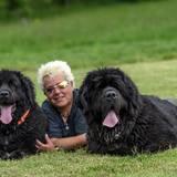 Paul, Duke & Tayma ( Neufundländer)