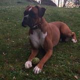 Yako (Boxer)