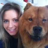 Fripouille (Chow Chow)