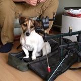 Nev (Jack Russell Terrier)