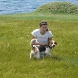 Truffa (Beagle Harrier)